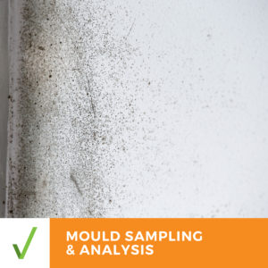 ALL CLEAR MOULD SAMPLING & ANALYSIS – Results Within 2 Business Days