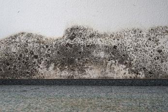 Asbestos Testing Christchurch | Asbestos Testing Auckland